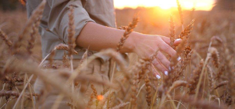 Life insurance as an asset concept, harvest time